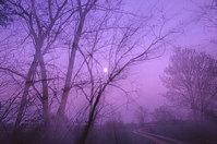 lunar outbreak