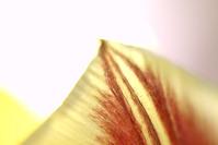 flower 's 7
