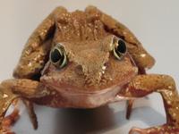Froggy Pond 3