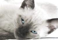 Moody Kitten