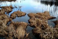 Lake and bog 4