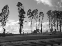 Sonoma area 2