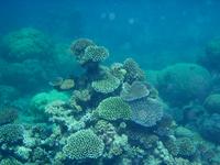 Underwater 3