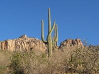 Winter in Sabino Canyon, Arizona 5