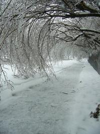 ice storms 3