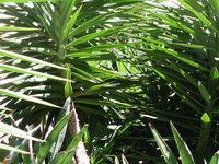 close up palm