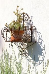 Wall & plants