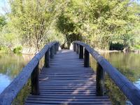 bridge to forest