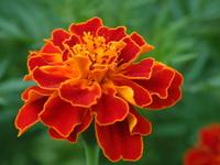 flower .1