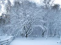 Polish winter 1