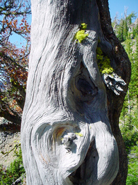 lichen moss and rocks 2