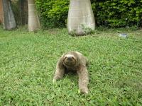 lazy-bear