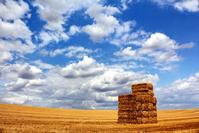 Field under a cloudy sky