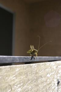 Grasshopper 5