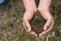 Handful of Dirt 5