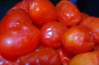 Grape Tomatoes on Dark Photo Spoiled Rotting