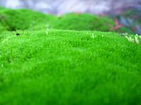 Mossy Carpet 4