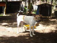 perro_aguacatero