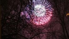 Fireworks behind tree