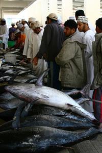 Muscat fish market 2