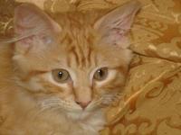 glancing kitten