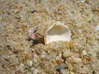 Sea Shells 3