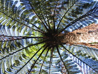 New Zealand Ferns