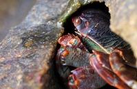 Crab Macro
