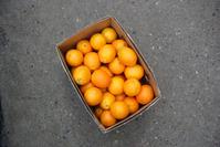Case of Oranges