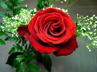 Sixth rose