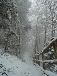 snow storm 3