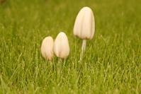 mushroom in gras