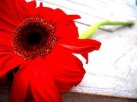 Reddd flower