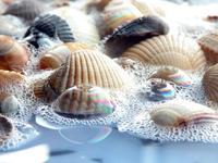 More shells 2