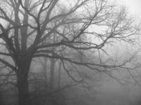 Fog in the backyard