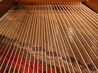 Piano Guts 3