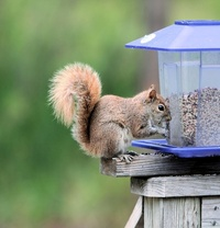 Squirrel with Color