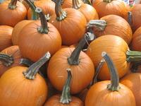 Pumpkins for Hallowe'en 1
