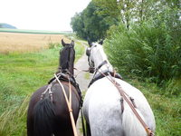 Two Horses 5