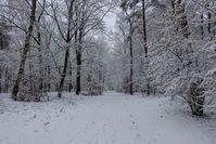 winter forest idyll