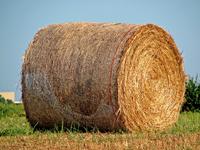 Field of Haystacks 1