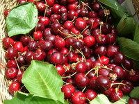 Beautiful cherries