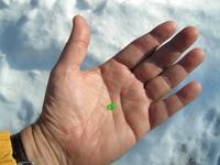 Little Green Pill