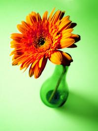 Flower in vase 2