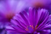 An eye catching flower