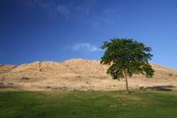 desert green 1