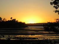sunset mangroves 2