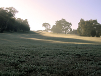 Frosty Hill