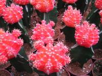 Colourful cactus 3