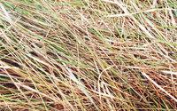 nature stock photos 1